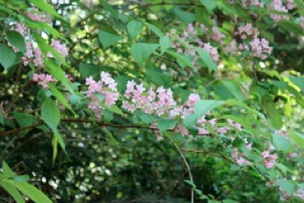 歩いて降りれば、登山道に咲く四季折々の花が目を楽しませてくれます。